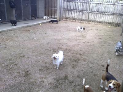 Small dogs yard